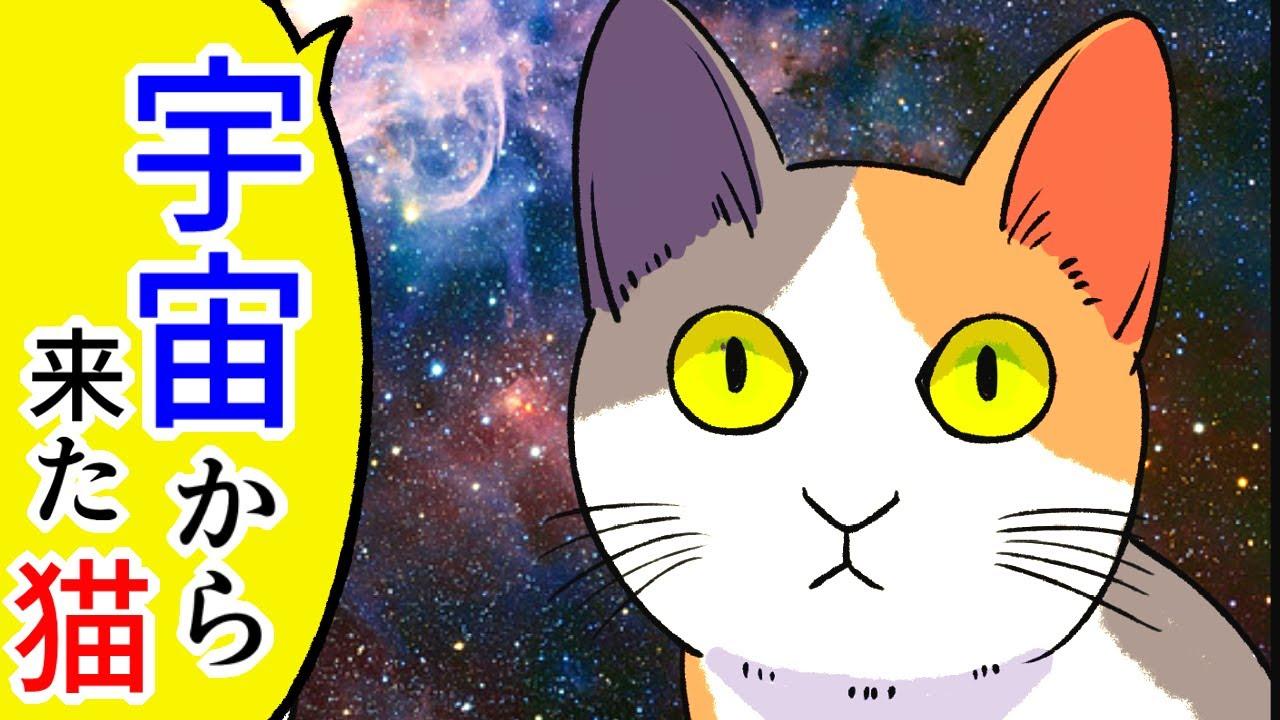 【猫まんが】『宇宙から来た』としか思えない不可解な猫の行動