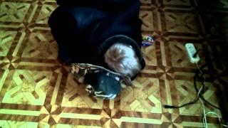 Смешное видео про Русика [часть 1].3gp