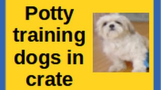 Potty training dogs in crate