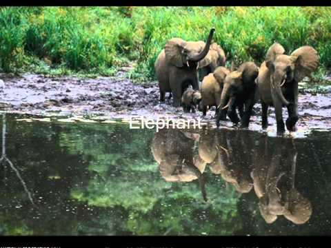 Best Tour & Travels Operator, Orang National Park in Assam for delhitourntravels.in