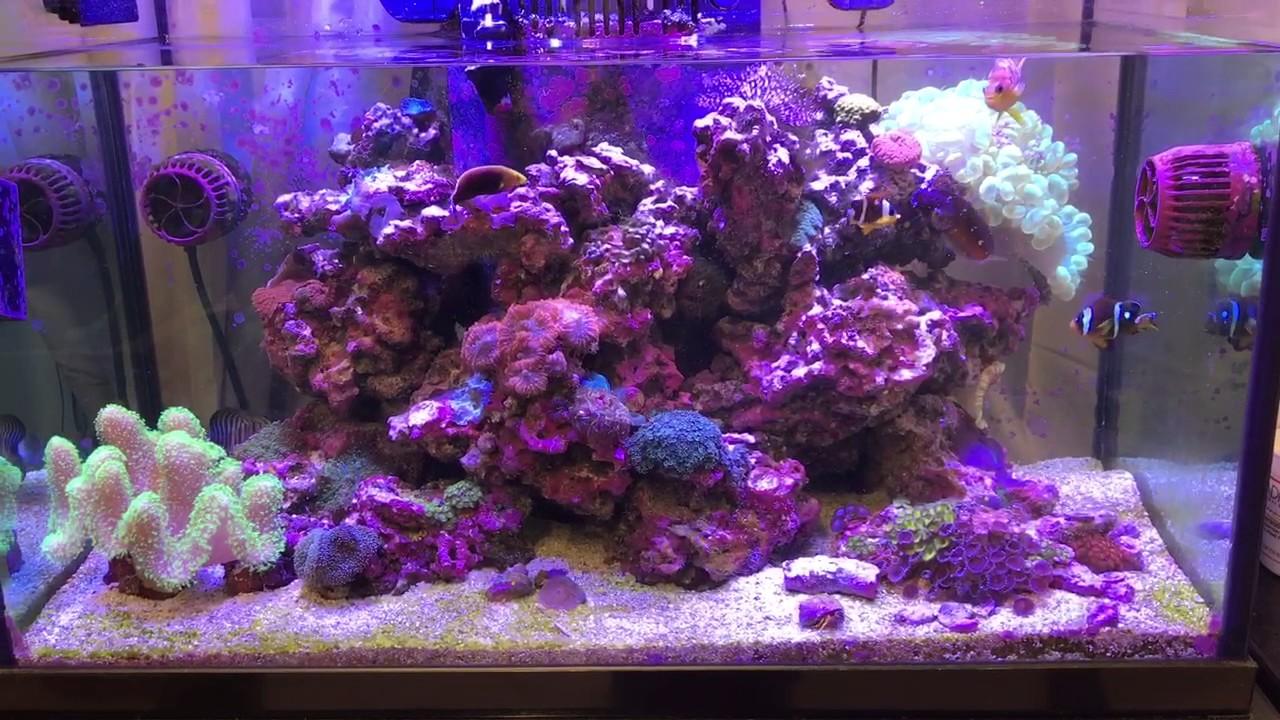 deep blue 57 gallon rimless aquarium youtube