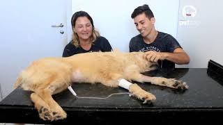 Neuropática idiopática em cães dor