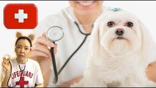 이상한 동물병원. 동물병원에 강아지와 팽귄 Animal hospital Role play l hospital story