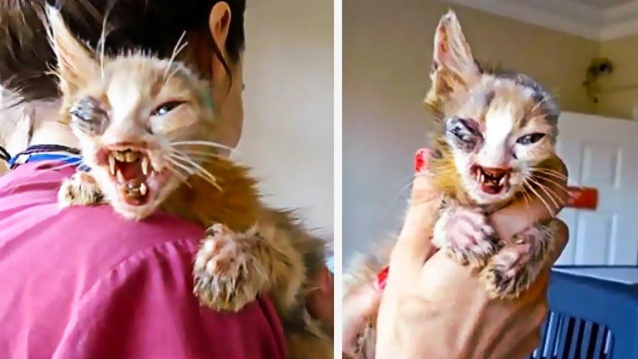 Todos Le Tenían Miedo A Las Aterradoras Miradas Del Gato. Luego Una Niña De 7 Años Hizo Esto