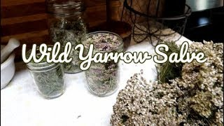 Gambar cover Wild Yarrow Salve | Herbal Infused Oil | Achilea Millefolium