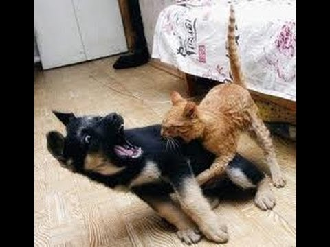 Cats vs dogs It's war Very funny