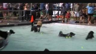 Dogs At The Highlands Ranch Rec Pool