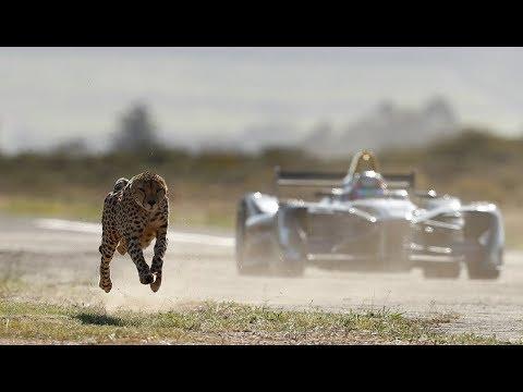 fur-flies-as-cheetah-races-formula-e-car-in-western-cape