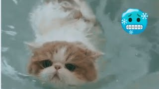 Cute Pussy Cat Compilations (Swimming Cats included)