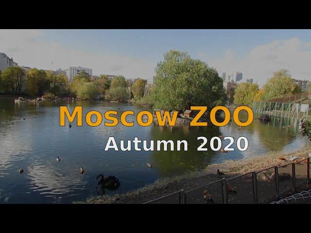 Moscow Zoo. Little walk .Московской зоопарк .