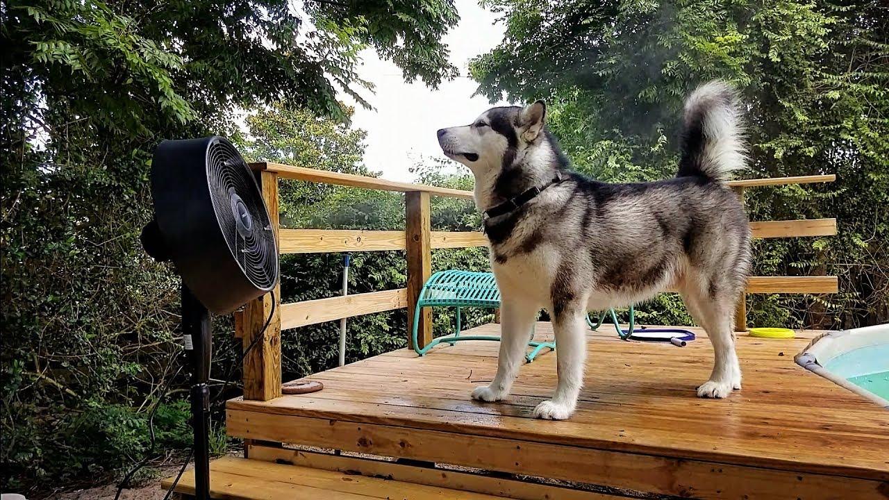 Image result for misting fan dogs