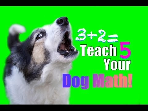 Impossible Dog Trick? How to Teach Your Dog Math