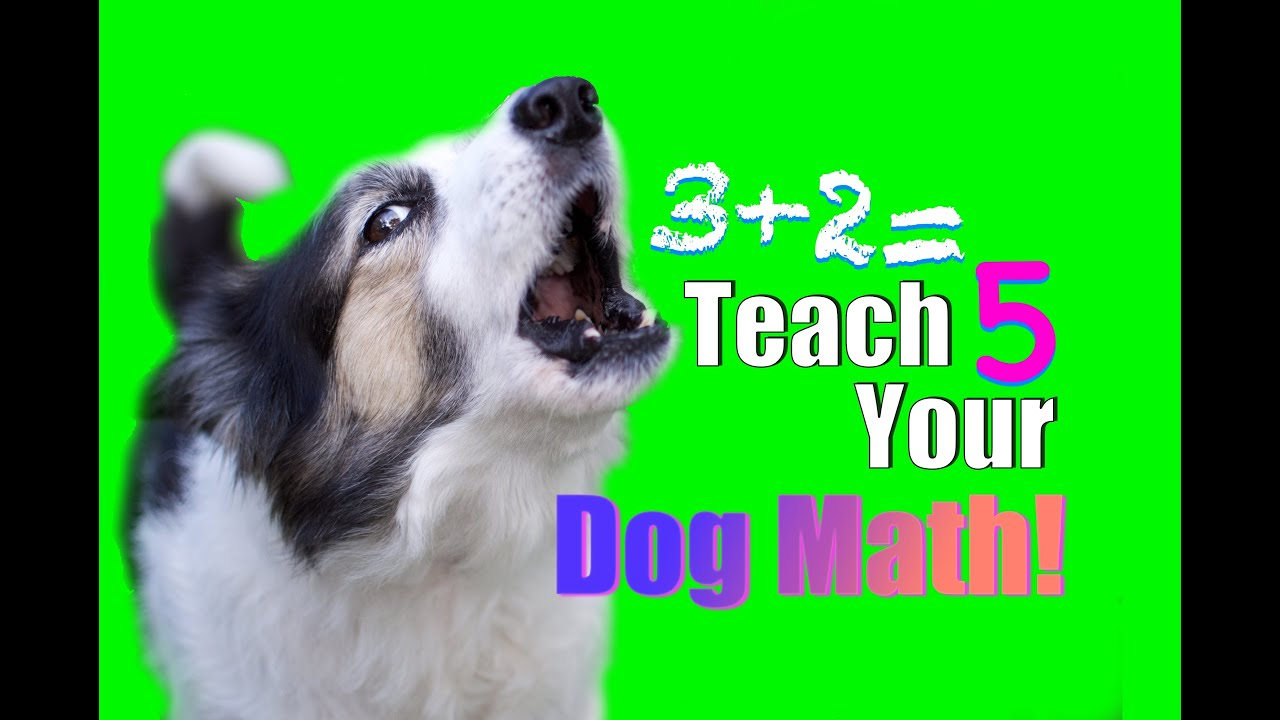 How To Teach A Dog To Stop