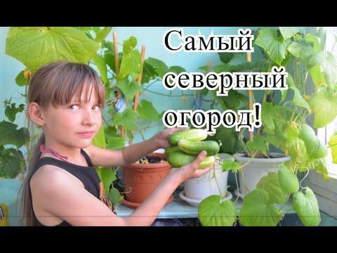 #Норильск  ВЛОГ ЖИЗНЬ НА СЕВЕРЕ. Мой огород на подоконнике! Огурцы на севере