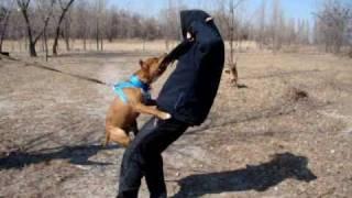 Дрессировка собак 37 | Украина Черкассы | 093 14 24 666