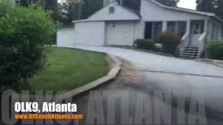 Holding Position While Out Of Site! | Corgi/chihuahua Mix | Obedience Training Atlanta