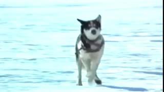 Baixar Antarctica- English Version- Hi Fi Stereo