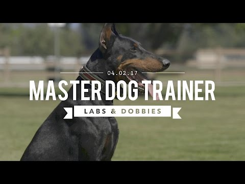 MASTER DOG TRAINING LABRADORS AND DOBERMANS