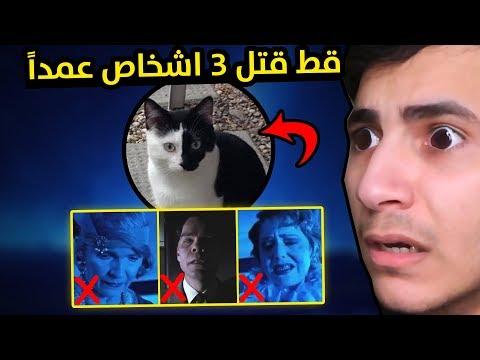 قطة من الجحيم I نظريات مرعبة