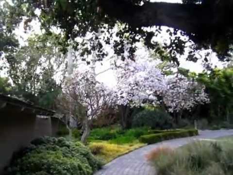 Tourist - Sunset Garden, Menlo Park, CA 02
