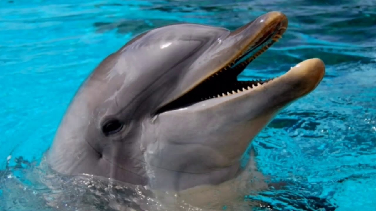 Dolphin Sounds - YouTube