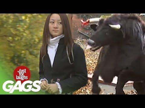 Bull Attack Prank