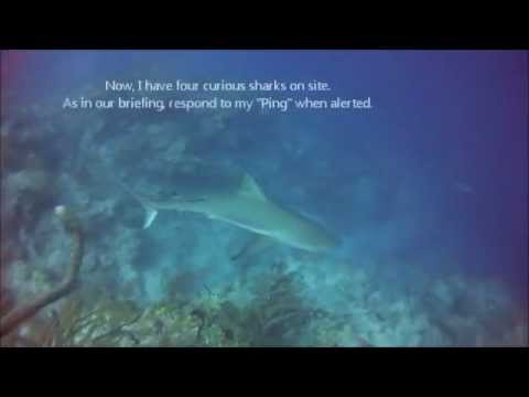 The Sharks at Half Moon Wall, Blue Hole Day Trip