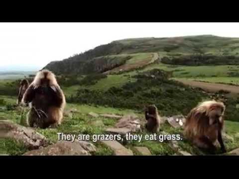 Trekking the Simien Mountains - Ethiopia