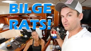Bilge Rat!!! - Maintenance Monday