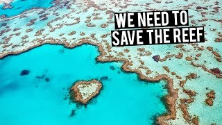 Our Dying Reef | What's being done to save it?