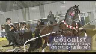 ADHHA Nationals 2014 Dutch Harness Horse Championships