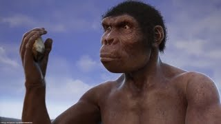 Evolution from ape to man. From Proconsul to Homo heidelbergensis