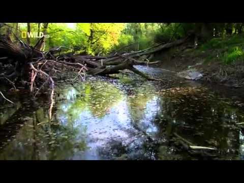 Wild Danube   english Documentary National Geographic Wild Part 1