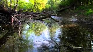 Wild Danube   english Documentary National Geographic Wild Part 1