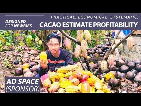 Magkano ang Gastos at Kikitain sa Pagtatanim ng Cacao? - Cacao Farming Profitability #12