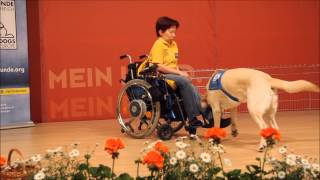 Partner-Hunde Österreich