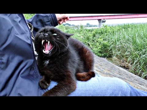 【地域猫】暴君の流儀に抗うすべなし!【魚くれくれ野良猫】