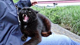 【地域猫】暴君の流儀に抗うすべなし!【魚くれくれ野良猫】 thumbnail