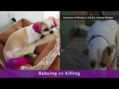 How To Chose The Best Soft Dog Toys
