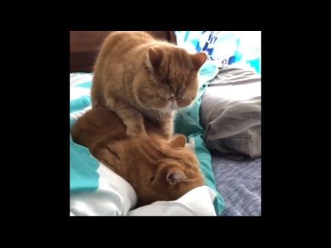 Cat gives feline best friend adorably relaxing massage
