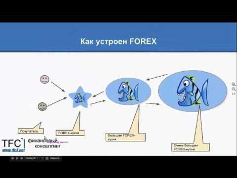 Почему не стоит начинать свой путь с рынка FOREX
