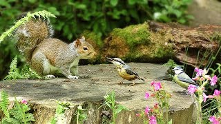 Videos for Cats : Birds and Squirrels in Woodland Wonderland
