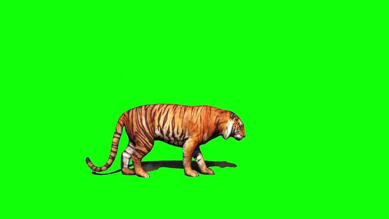 tiger background green effect - youtube