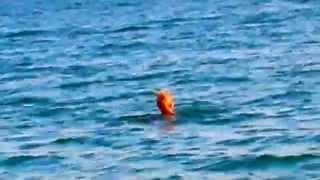 Сергей Хапинин: Гудаута - пляж(, 2014-12-15T19:14:13.000Z)