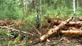 Лесной беспредел ООО Лебяжье лес в заказнике
