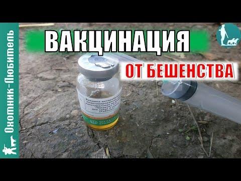 Вакцинация от бешенства! ВАЖНО для собаководов