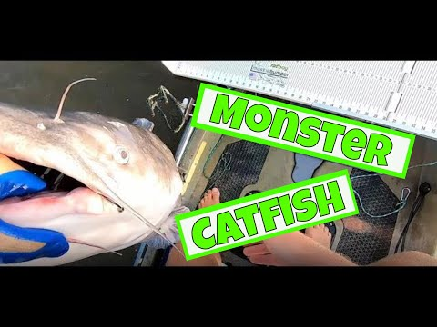 The Grind Pays Off With A MONSTER Blue Catfish | James River | Kayak | Catfishing