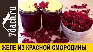 Желе из красной смородины: кладите кисточки целиком - 7 дач