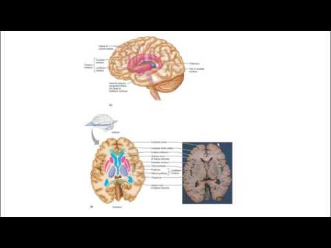 Neuromuscular basis of movement Part IV
