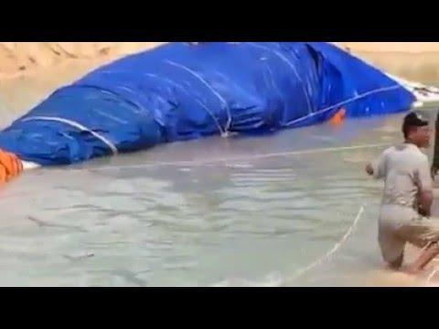 Cá ông được đưa vào nơi an nghỉ 6/4 Tại Đảo Phú Quý